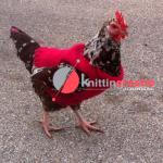 одежда для курицы